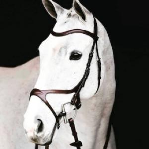 Outlet Häst